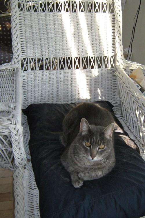 catblogging-003