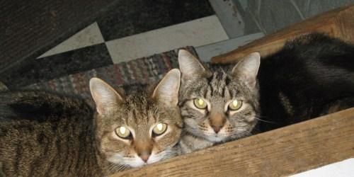 catblogging-008