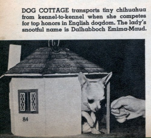 dog_cottage