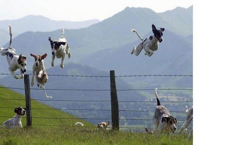 jumping-dogs1
