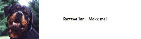 rottweiler1