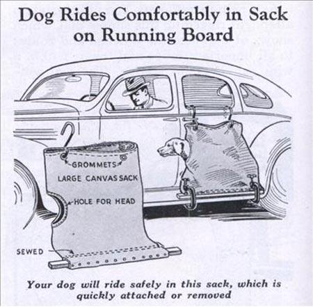 safe-dog-rides