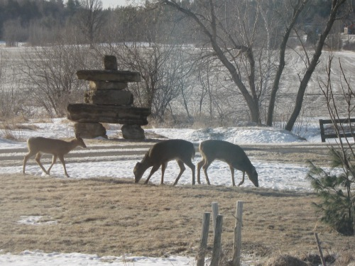 sunday-deer-0131