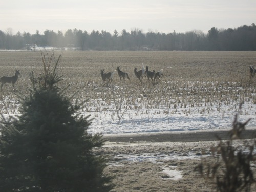 sunday-deer-021