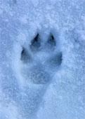 snowfootprint