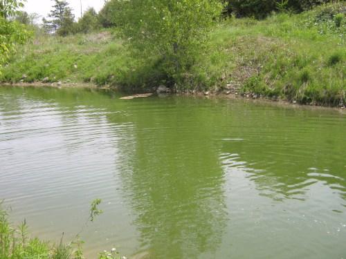 pond 005