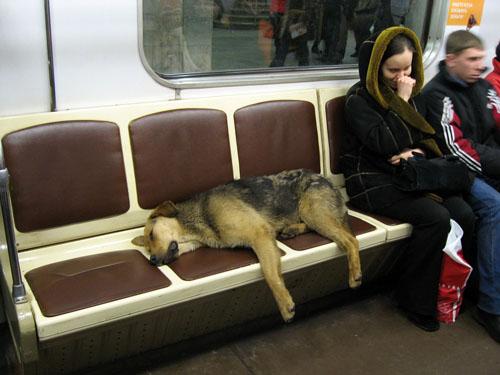 russiandog2