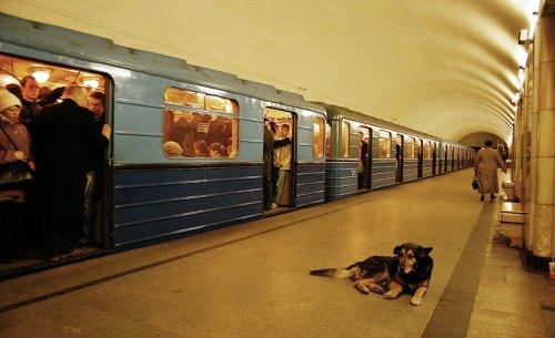 russiandog3