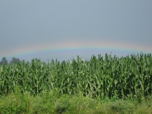 rainbow 017