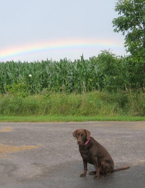 rainbow 021