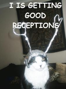tinfoilcat