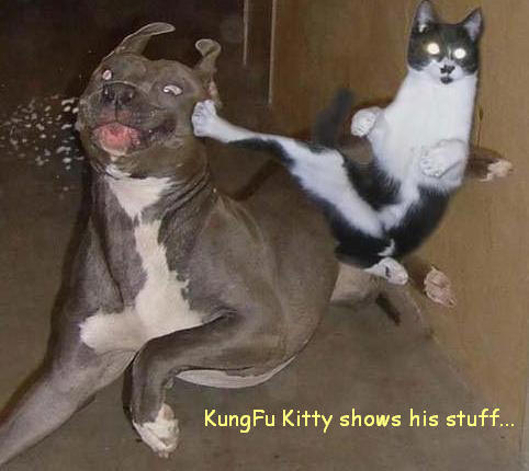 kungfukitty