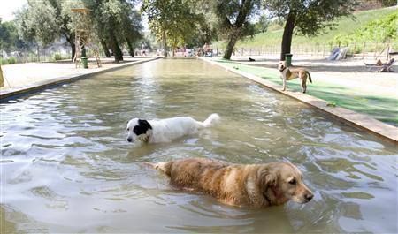 rome pool