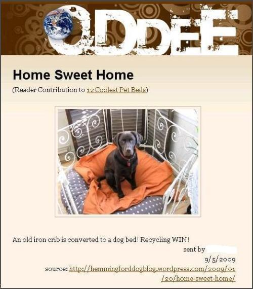 Coolest Pet Beds