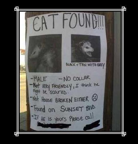 found_cat