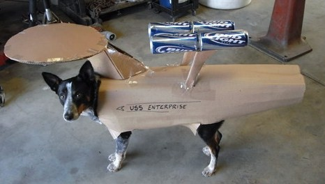 startrek dog