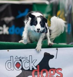 dockdog1