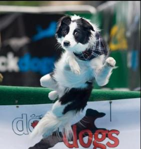 dockdog3