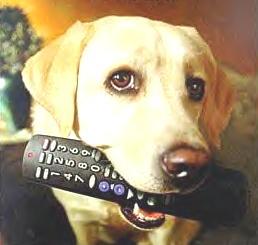 remotedog