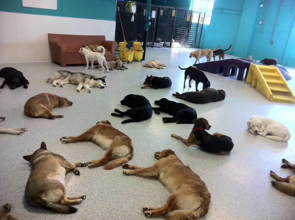 Dog Days Doggie Daycare