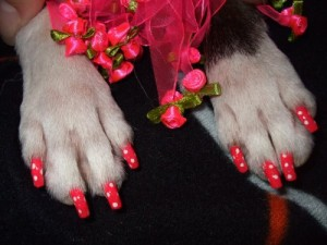 dog polish