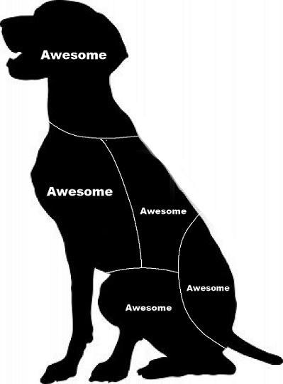 Diagram Of Cat Meme