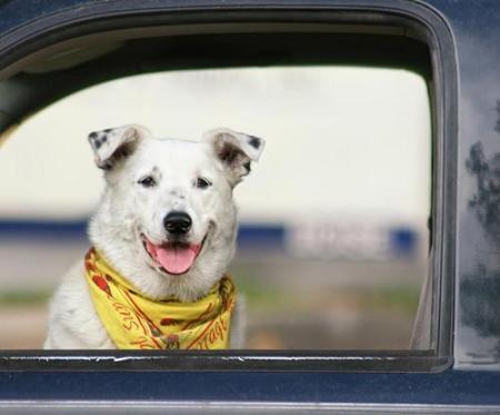 kerouac dog11