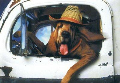 kerouac dog12