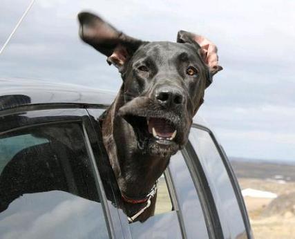 kerouac dog4