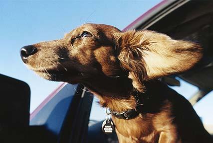 kerouac dog5