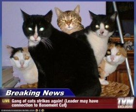 gang of cats