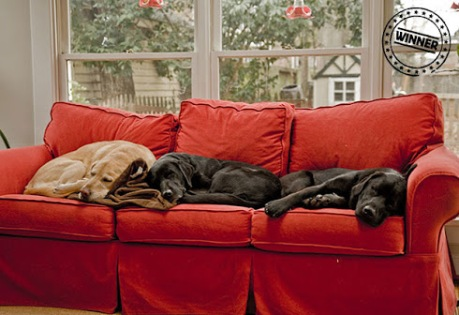 Image result for dogs on a couch