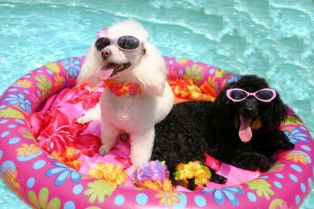 pooldog3