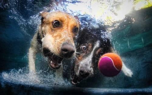 pooldog4