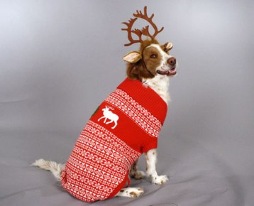 dog sweater2