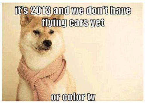 philosopher dog